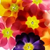 Fototapeten: Blumen 22 2