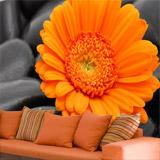 Fototapeten: Blumen 17 4
