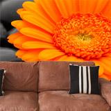Fototapeten: Blumen 17 5