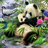 Fototapeten: Panda-Bär  2