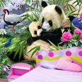 Fototapeten: Panda-Bär  3