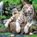 Fototapeten: Albino Tiger 2