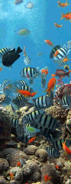 Wandtattoos: Fondo marino