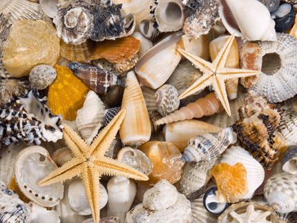 Wandtattoos: Köstlichkeiten aus dem Meer