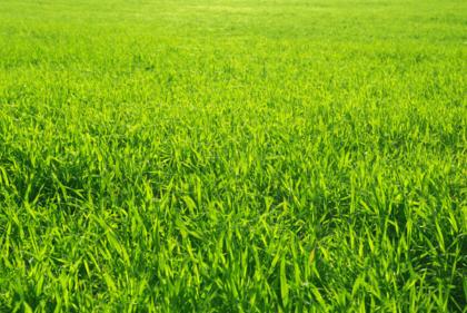 Wandtattoos: Green Gras