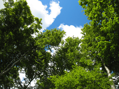 Wandtattoos: Forest