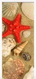 Wandtattoos: Tür Meeresmotive 6
