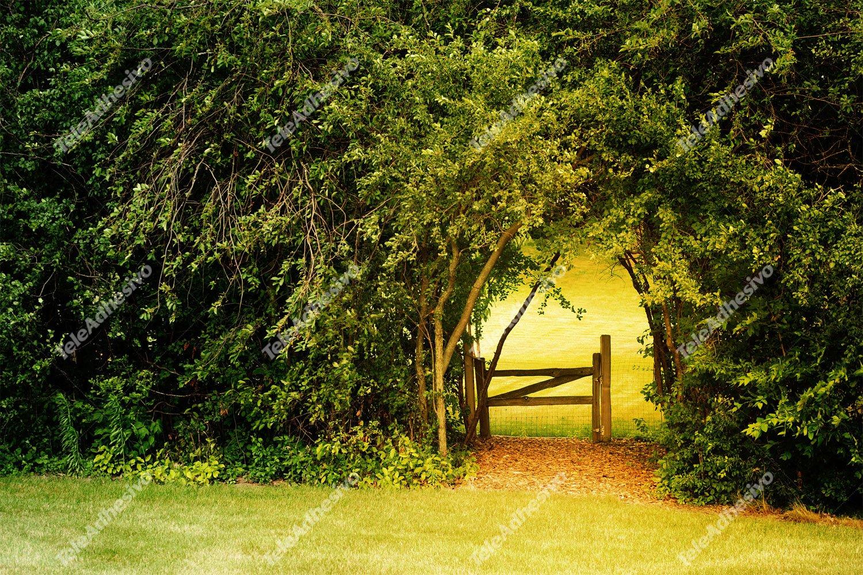 Fototapeten: Natürliche Wand