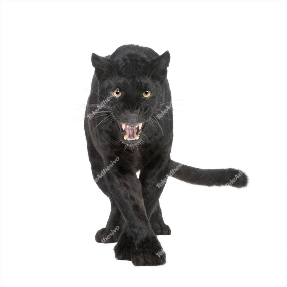Fototapeten: Black Panther