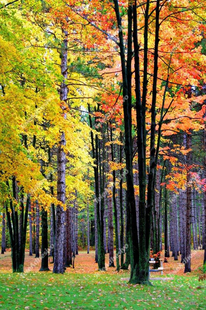 Fototapeten: Wald