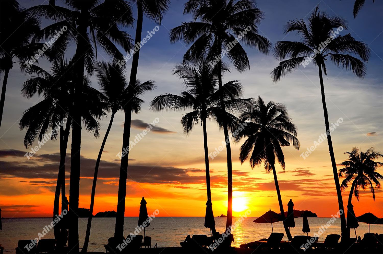 Fototapeten: Coconut