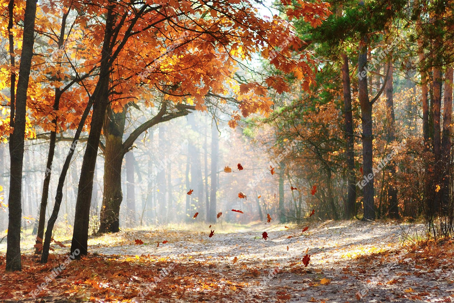 Fototapeten: Autumn Forest