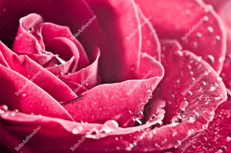 Fototapeten: Wet Blütenblätter