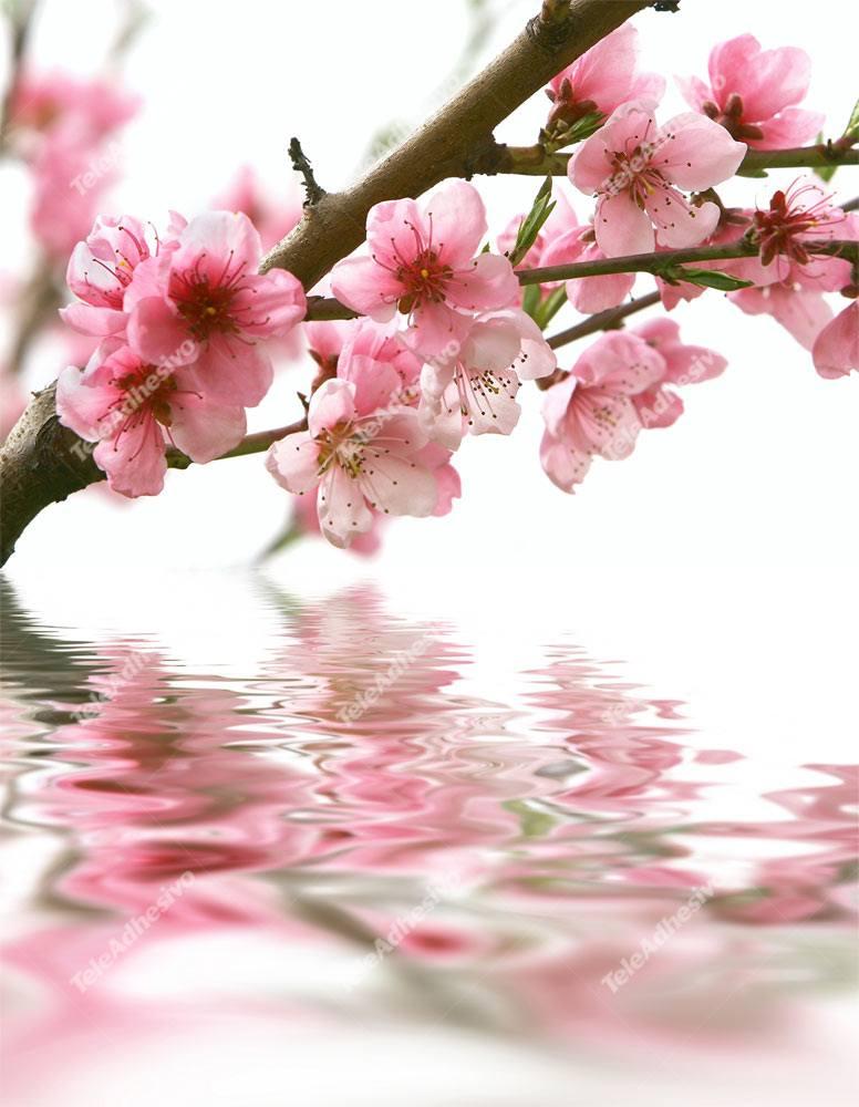 Fototapeten: Mandelblüte