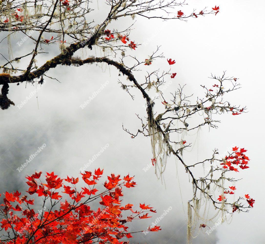 Fototapeten: japanischer Ahorn