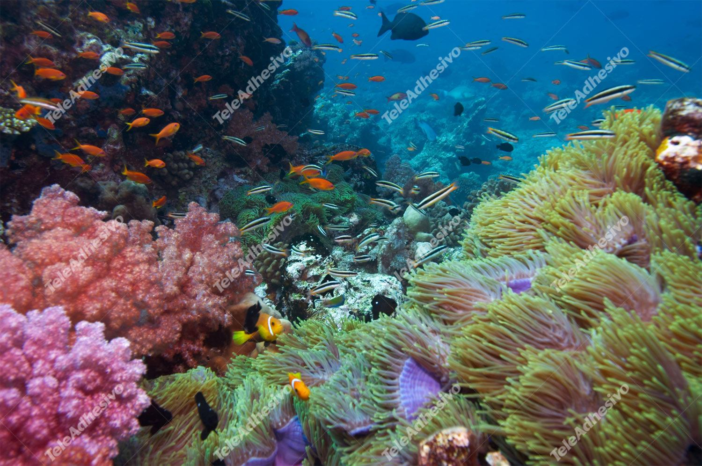 Fototapeten: Meeresbodenbehörde