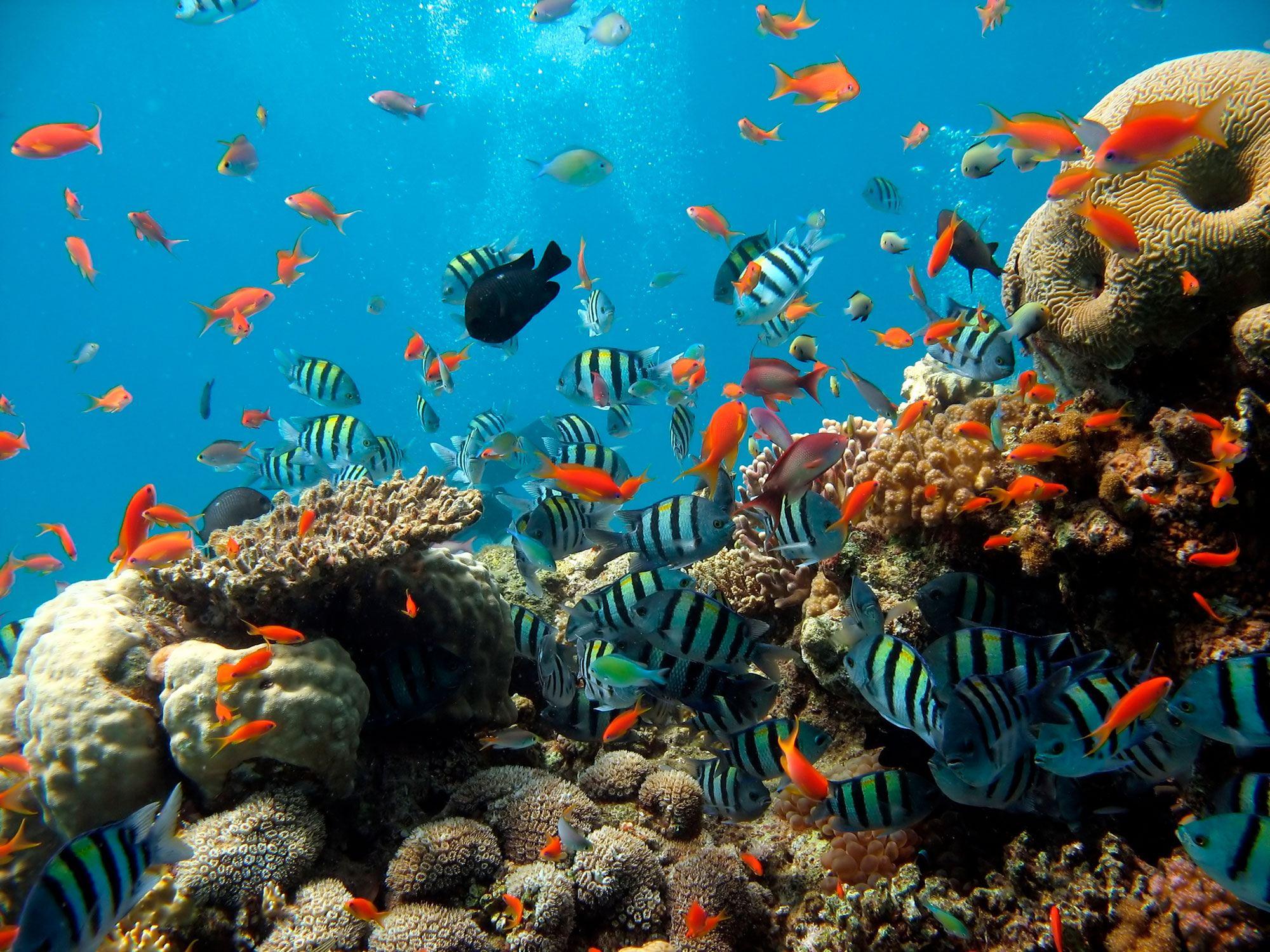 Fototapeten: Arrecife 2