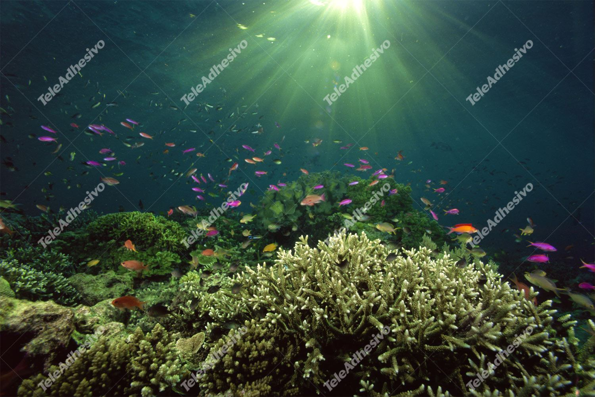 Fototapeten: Coral im Licht