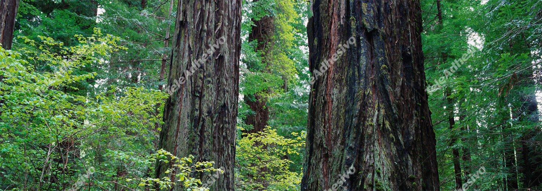 Fototapeten: Mitten im Wald