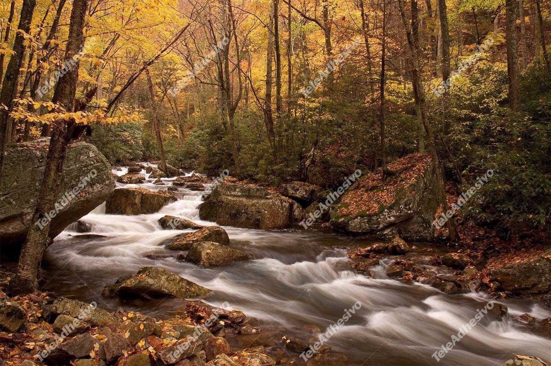 Fototapeten: Wald Fluss