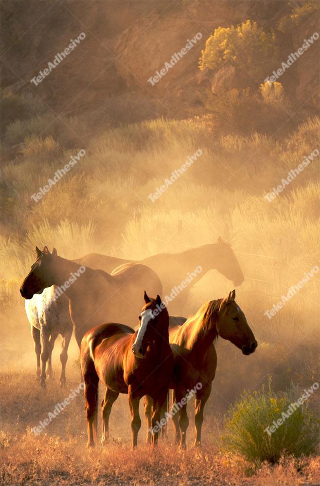 Fototapeten: Herden von Pferden