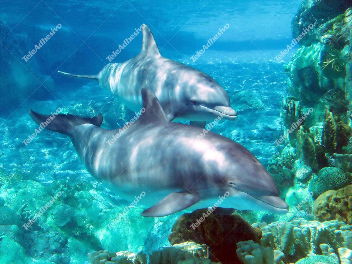 Fototapeten: Dolphins