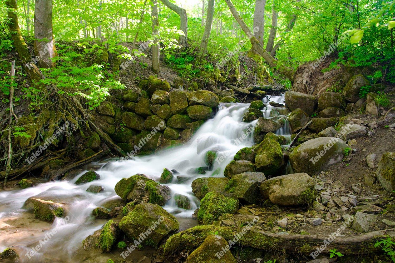 Fototapeten: Waldwasser