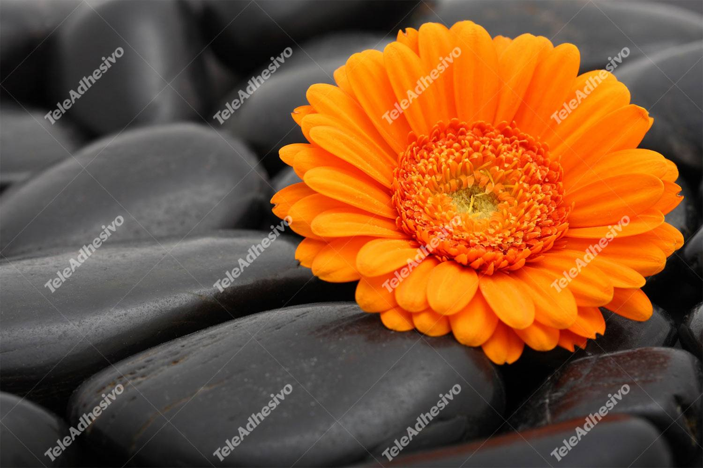 Fototapeten: Blumen 17